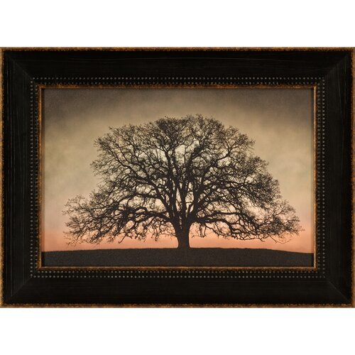 Majestic Oak Framed Photographic Print