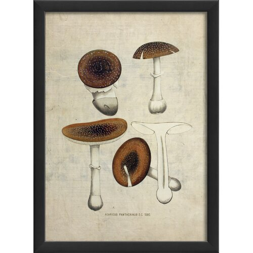 Blueprint Artwork Mushroom Framed Graphic Art