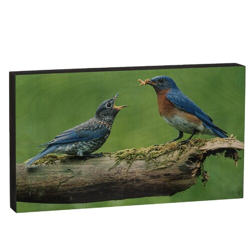 Summit Bluebird with Baby Wall Art