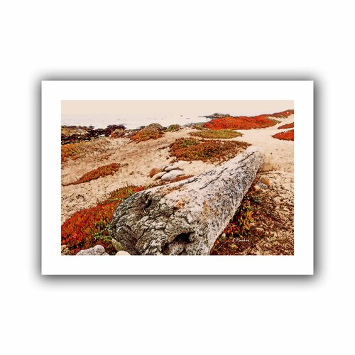 'Log on Pebble Beach' by Linda Parker Unwrapped on Canvas