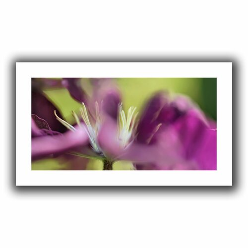'Clematis Panorama' by Cora Niele Unwrapped on Canvas