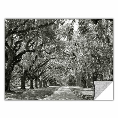 ArtApeelz 'Live Oak Avenue' by Steve Ainsworth Graphic Art