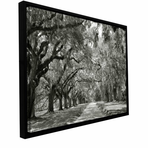'Live Oak Avenue' by Steve Ainsworth Floater Framed Gallery-Wrapped Canvas Art