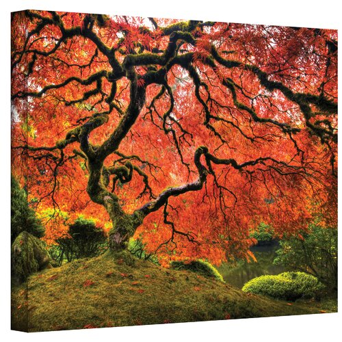 Art Wall ''Japanese Tree'' by John Black Photographic Print Canvas