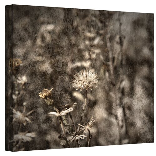 Art Wall ''Dormant'' by Mark Ross Photographic Print on Canvas