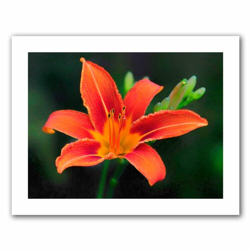 Art Wall 'Petals In Focus' by David Liam Kyle Photographic Print on Canvas