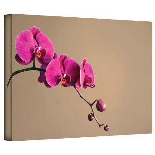 Art Wall 'Magenta Orchid' by Elena Ray Photographic Print on Canvas