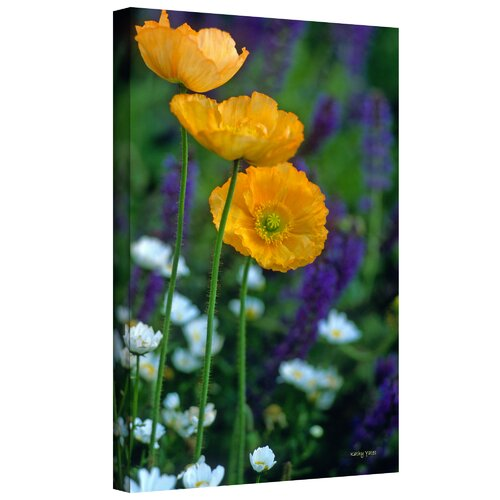 Art Wall 'La Playa Poppies' by Kathy Yates Photographic Print on Canvas