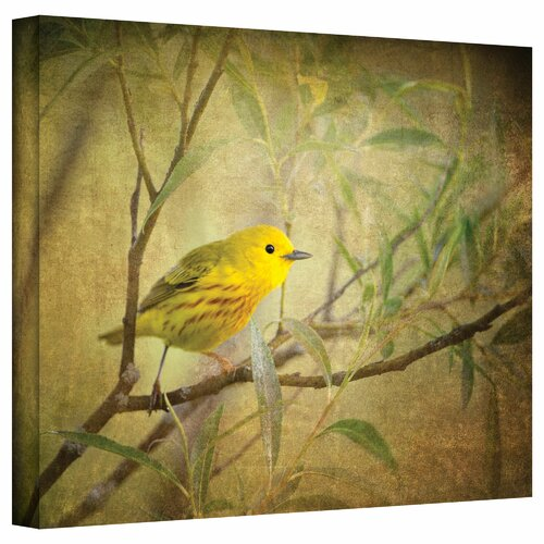 'Bird on Branch' by David Liam Kyle Graphic Art Canvas