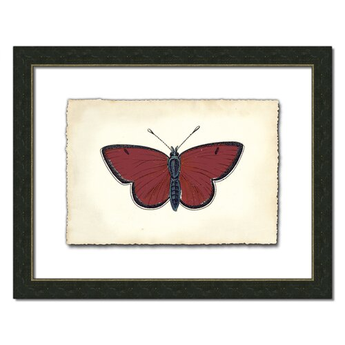 Butterfly ll Framed Graphic Art