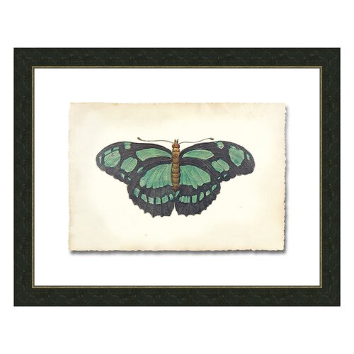 Butterfly lV Framed Graphic Art