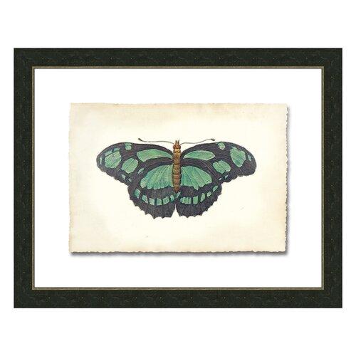 Butterfly lV Framed Graphic Art