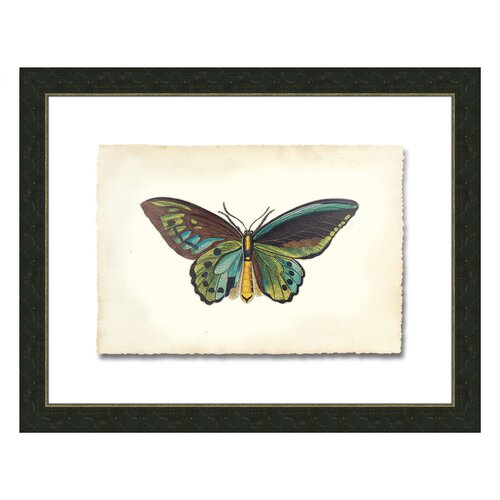 Butterfly V Framed Graphic Art