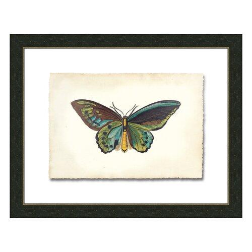 Butterfly V Framed Graphic Art