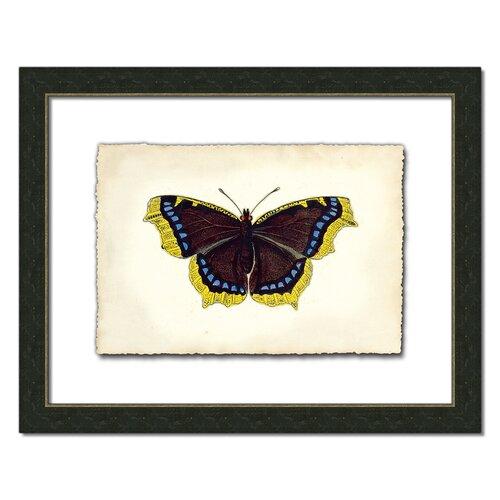 Butterfly Vll Framed Graphic Art