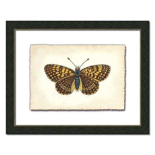Butterfly Vlll Framed Graphic Art