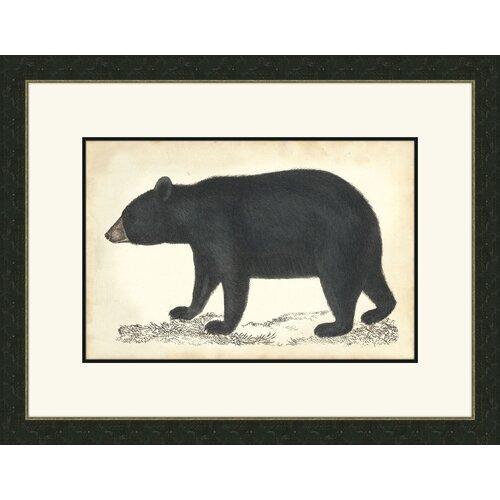 Bear I Framed Graphic Art