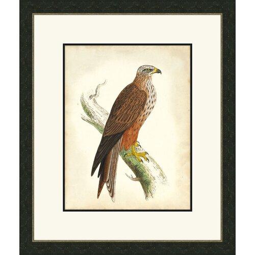 Hawks lll Framed Graphic Art
