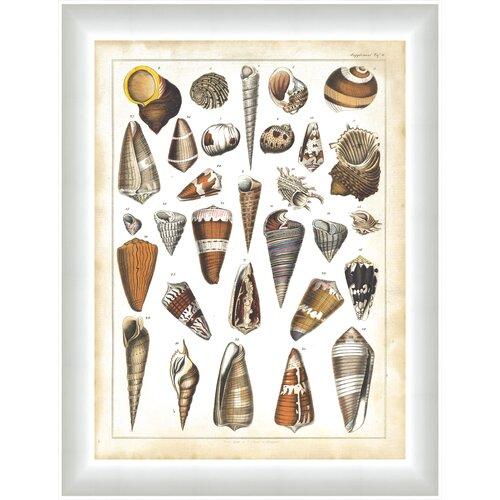 Oken Shells ll Framed Graphic Art