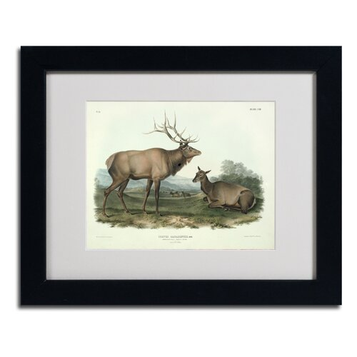 John James Audubon 'Cervus Canadensis' Matted Framed Art