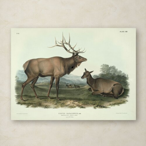 John James Audubon 'Cervus Canadensis' Canvas Art