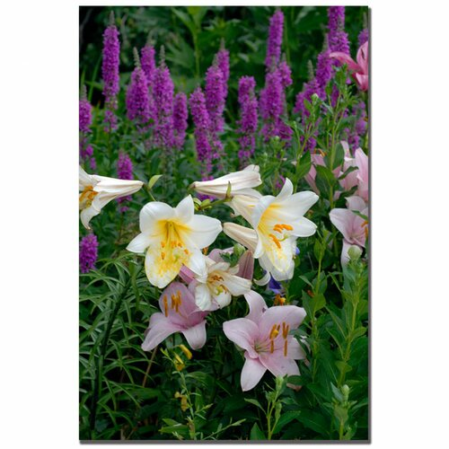 Trademark Fine Art 'Lovely Garden II' by Kurt Shaffer Photographic Print on Canvas