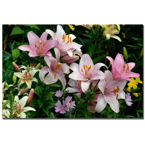 Trademark Fine Art 'Pink Lilies' by Kurt Shaffer Photographic Print on Canvas
