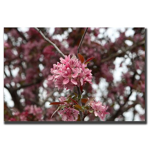 Trademark Fine Art Pink Bloom by Cary Hahn Photographic Print on Canvas