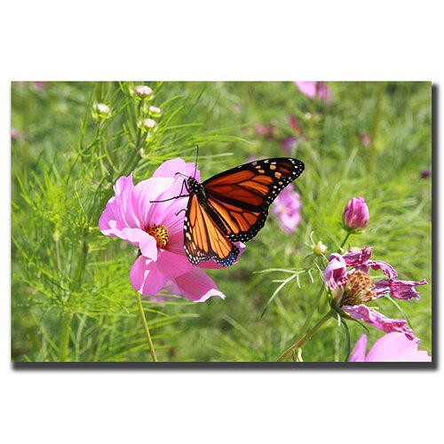 Trademark Fine Art Spring I by Cary Hahn Photographic Print on Canvas