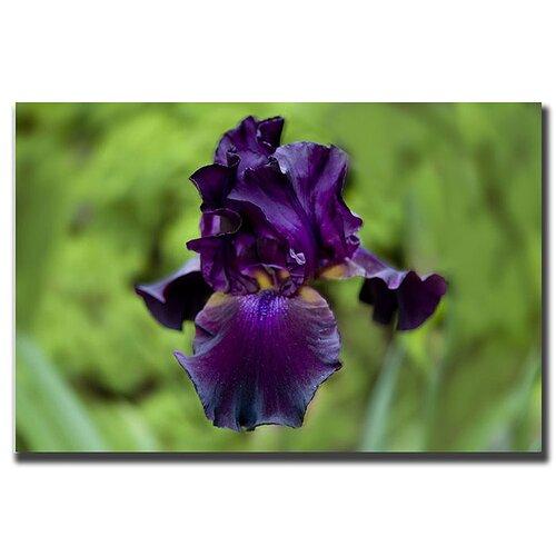 Purple Flower Cary Hahn Photographic Print on Canvas
