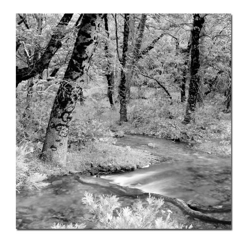 'Yosemite' by Preston Photographic Print on Canvas