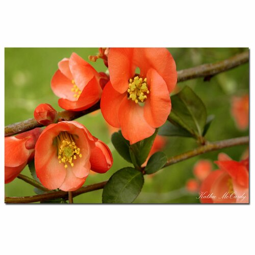 'Quince' by Kathie McCurdy Photographic Print on Canvas