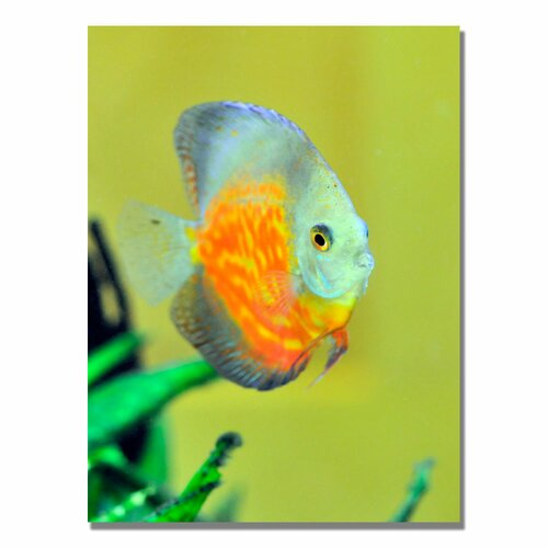 'Tropical Fish Golden' by Kurt Shaffer Photographic Print on Canvas