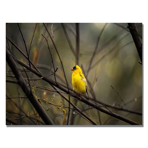 'Golden Finch' by Lois Bryan Photographic Print on Canvas