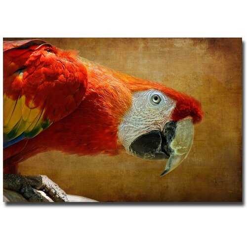 'Colorful Bird' by Lois Bryan Photographic Print on Canvas