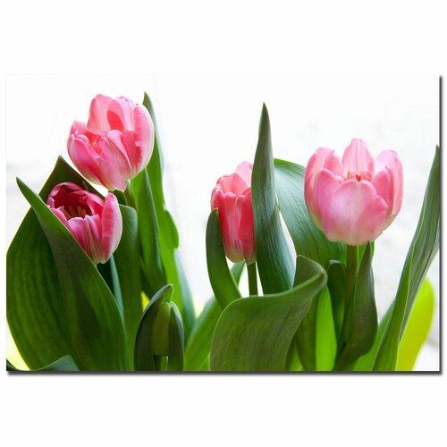 Trademark Fine Art 'Pink Tulip' by Martha Guerra Photographic Print on Canvas