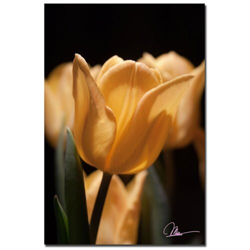 'Tulips Blooms VII' by Martha Guerra Photographic Print on Canvas