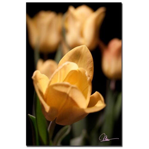 'Tulips Blooms VIII' by Martha Guerra Photographic Print on Canvas