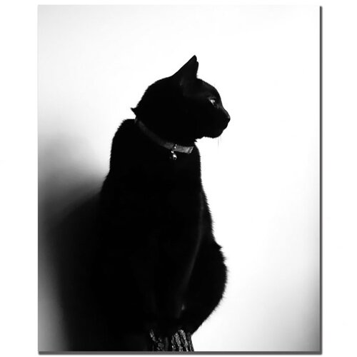 "Trademark Fine Art ""Chat Noir"" by Tammy Davison Photographic Print on Canvas"