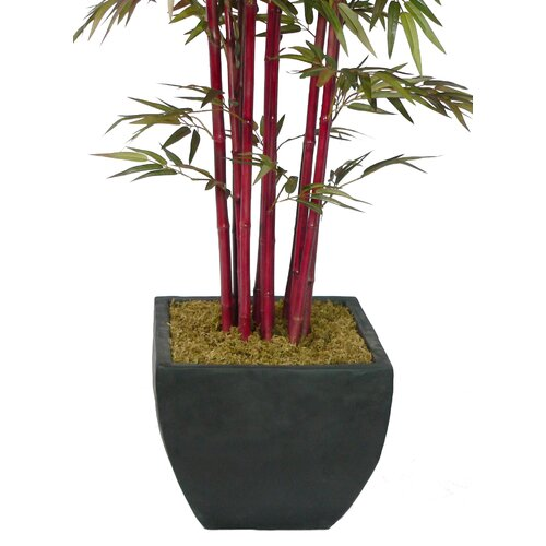 Laura Ashley Home Realistic Bamboo Tree in Planter