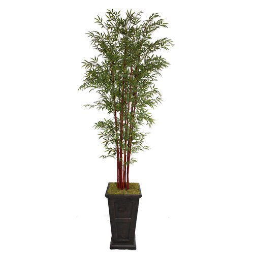 Tall Harvest Bamboo Tree in Planter
