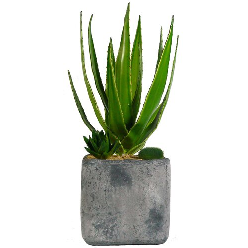 Succulents Desk Top Plant in Pot