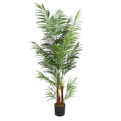 Areca palm tree in pot wayfair - Real areca palm ...