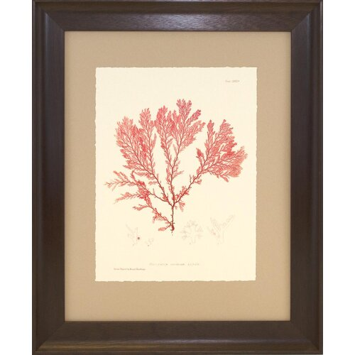 Indigo Avenue Seaside Living Nature Print in Coral IV Framed Graphic Art
