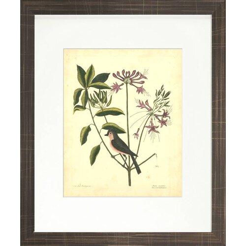 Indigo Avenue Floral Living Catesby Bird and Botanical I Framed Graphic Art