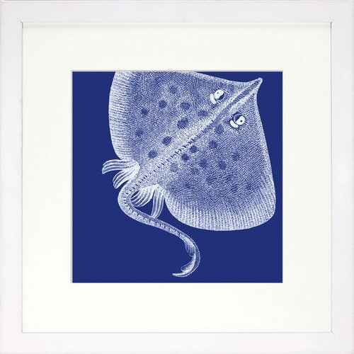 Seaside Living Saturated Sea Life Sea Ray Framed Graphic Art in Indigo