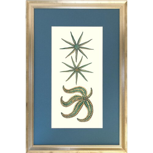 Seaside Living Aquamarine Starfish II Framed Graphic Art