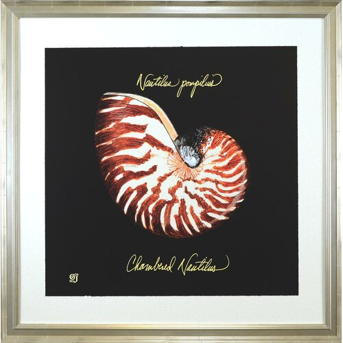 Indigo Avenue Seaside Living Striking Shellls II Framed Graphic Art