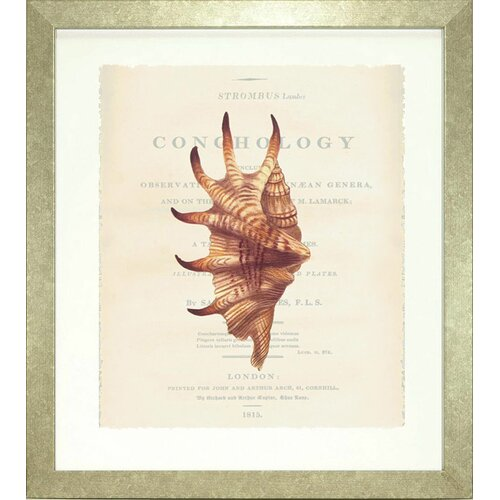 Seaside Living Conchology Strombus Lambis Framed Graphic Art