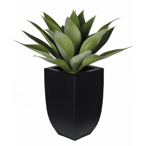 House of Silk Flowers Artificial Desk Top Plant in Vase